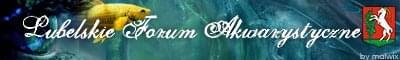 Forum Lubelskie Forum Akwarystyczne Strona G��wna