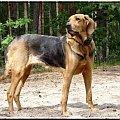#KoniecWakacji #łononatury #ogarpolski #pies #rasa #sierpień #wycieczka
