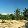 Okolice Rogowa #Rogów #las