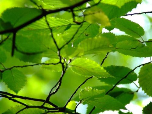 #natura #liscie #zielone