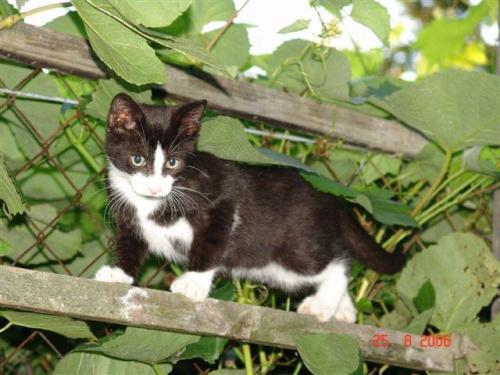 Kotek Danuśki