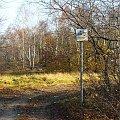 Przez las do Wronowa #las #droga #SzlakRowerowy