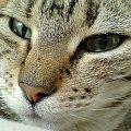 mój kociak (K750i) #kociak #mój
