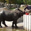 #zwierz #karmienie #woda