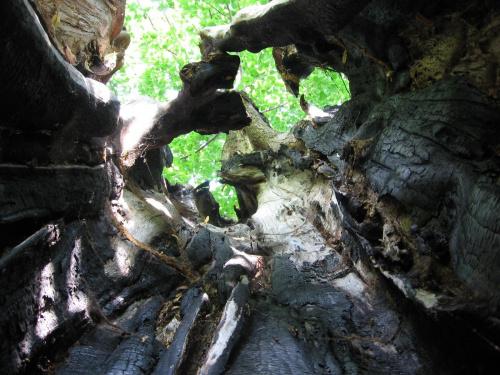 Wewnątrz wypalonego, ogromnego drzewa. Stojąc w środku ciężko było sięgnąć rękami dwóch przeciwległych miejsc.
