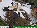 http://images4.fotosik.pl/82/c5999f9b79c3fe31m.jpg
