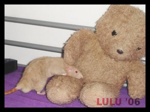 Lorenco i Miś