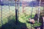 http://images4.fotosik.pl/90/2e95a241d3800b20m.jpg